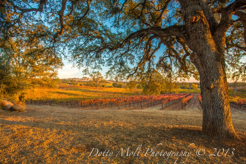 The other Wine Country Autumn Color