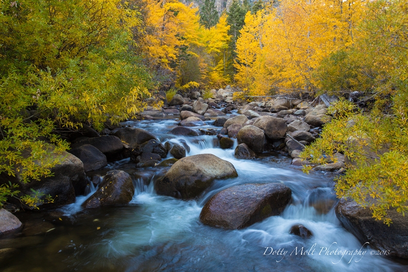 West Fork Carson River Autumn