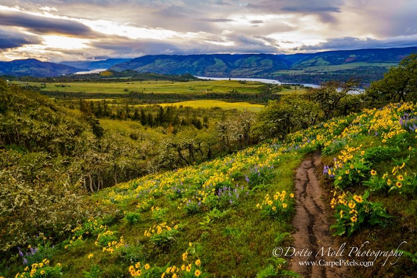 OR Rowena Crest Trail Sunset 96 dpi