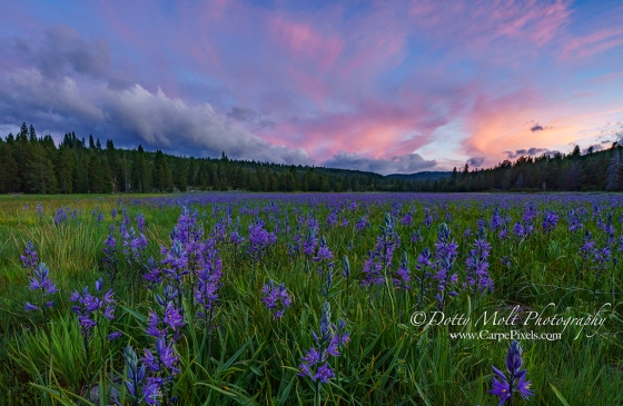An Alpine Meadow at Sunset