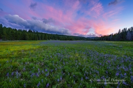 An Alpine Meadow outside of Truckee CA